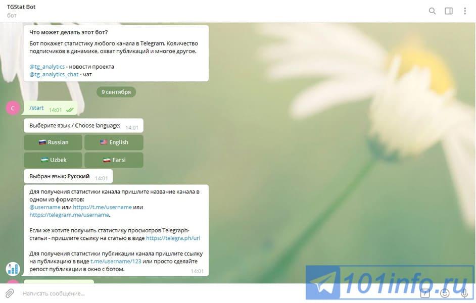 telegramm-analytics-3